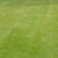 lawn-care-services-in-Raleigh-NC