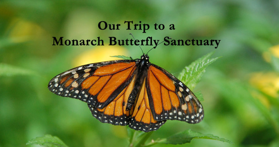 monarch-butterfly-sanctuary-mexico