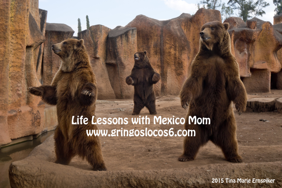 morelia-zoo-bears