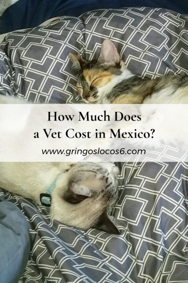 How Much Does a Vet Cost in Mexico?