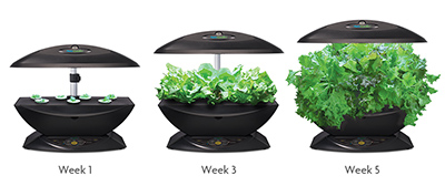... Gourmet Herb Grow Anything Kit Hydroponic Countertop Garden eBay