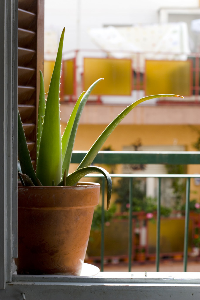 window and cactus