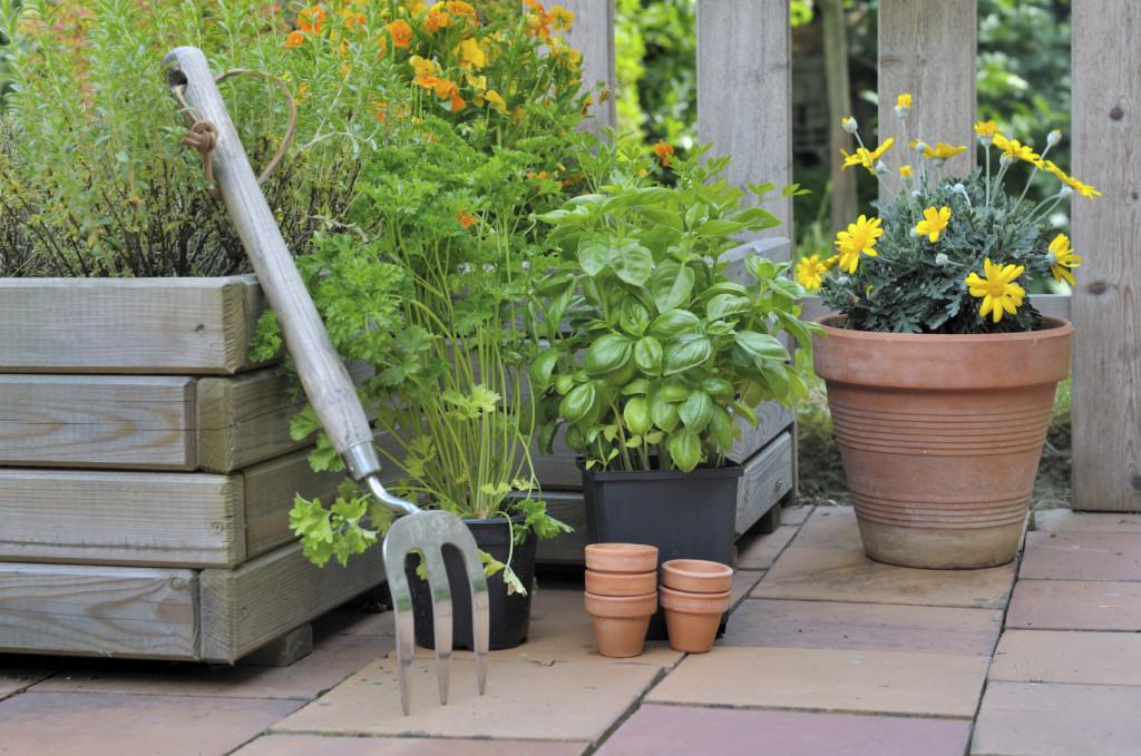 aromatic plant on patio