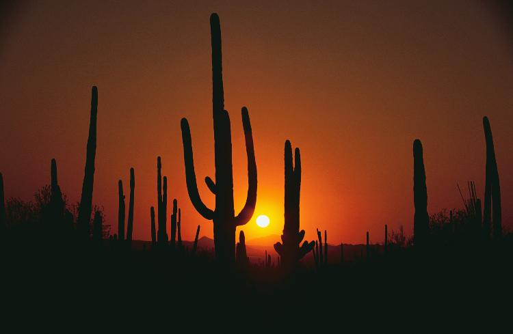 Saguaro Sunset - Courtesy - GPCVB