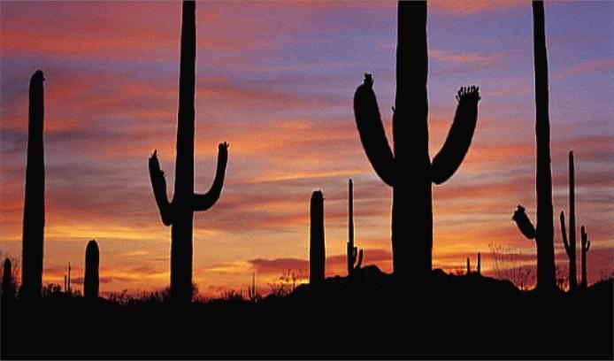 Saguaro Sunset - Courtesy - GPCVB