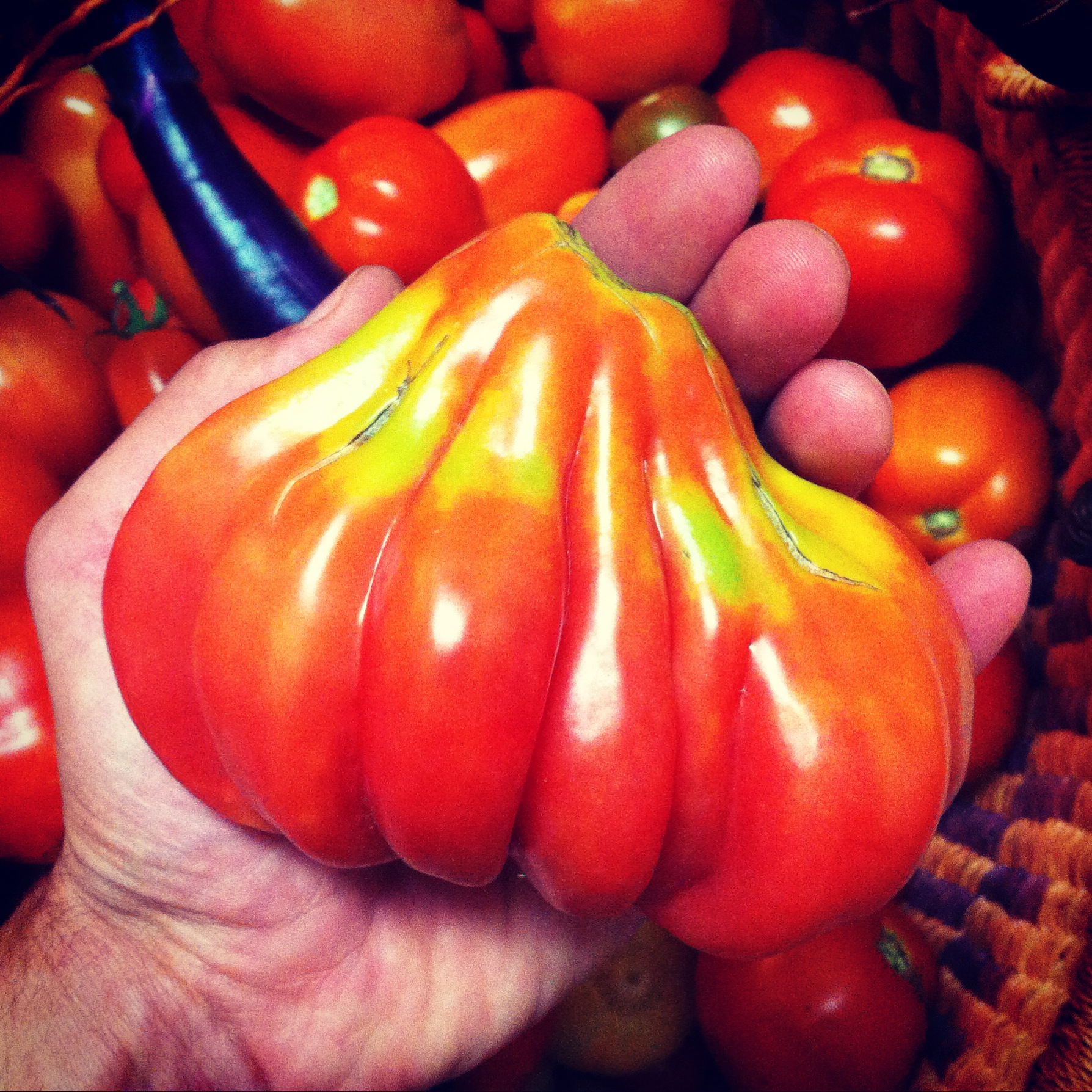 Tlacalula, an heirloom stuffing tomato from Mexico. Cost of the single seed that grew this beauty? $0.001. And it was full of new seeds that we can grow in future years.