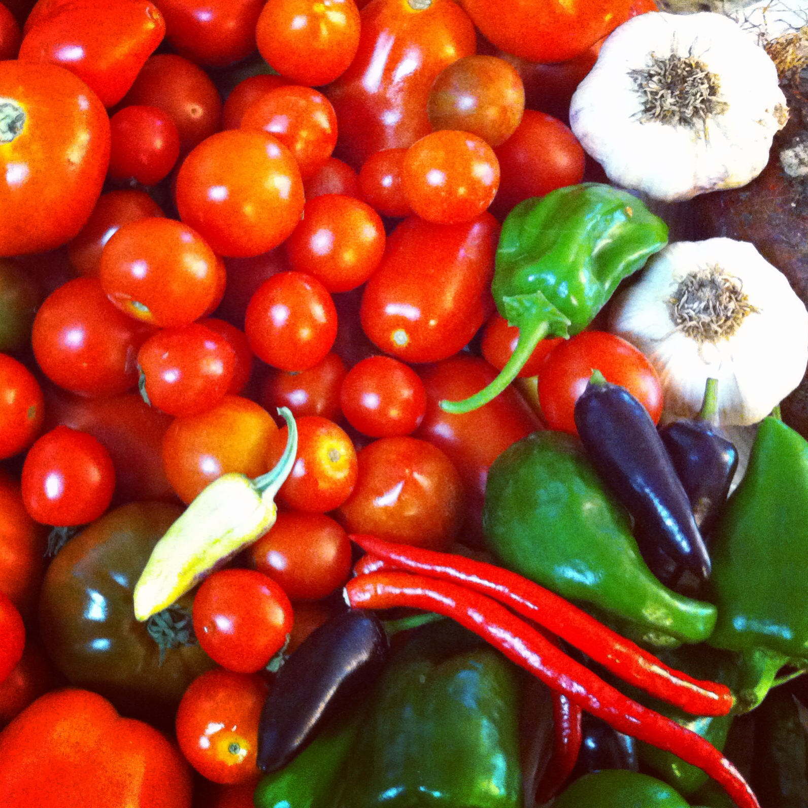 Salsa time at Tyrant Farms! Fresh-picked tomatoes, hardneck garlic and peppers ready to go into the blender.
