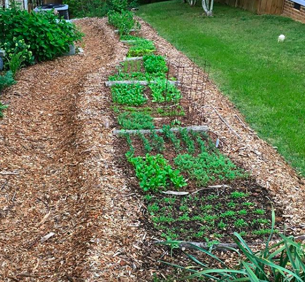 This is a new hugelkultur bed we made in early spring. Notice the clear walking path to the left and the grassy area to the right for foot traffic. Also notice the width of the bed - we can easily reach to the center of the bed from either side.