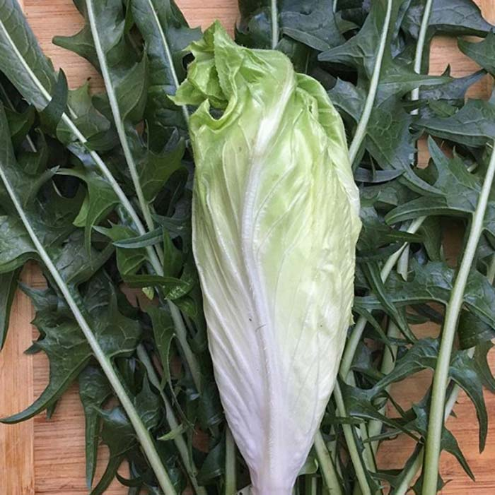 Chicory comes in an amazing array of sizes, shapes, and colors. Easiest Garden Plants to Grow in the Fall and Winter by Tyrant Farms