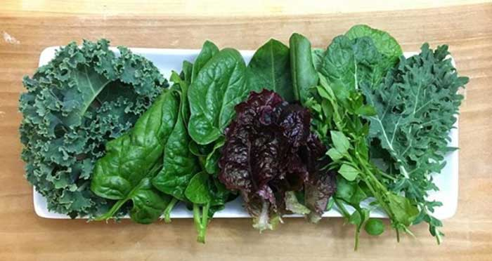 A beautiful sampling of some of the leafy greens you can grow in your fall and winter garden, including different varieties of kale, spinach, lettuce, chicory, and even wild chickweed! Easiest Garden Plants to Grow in the Fall and Winter by GrowJourney.com