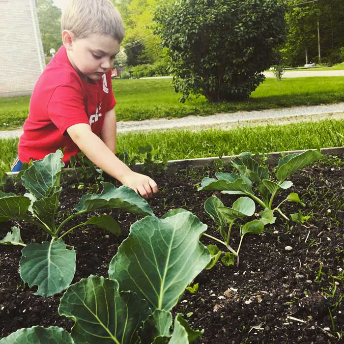 My son, Brayden, helped to pull weeds around the cabbage plants. | How to Get Your Kids to Enjoy Gardening by GrowJourney.com