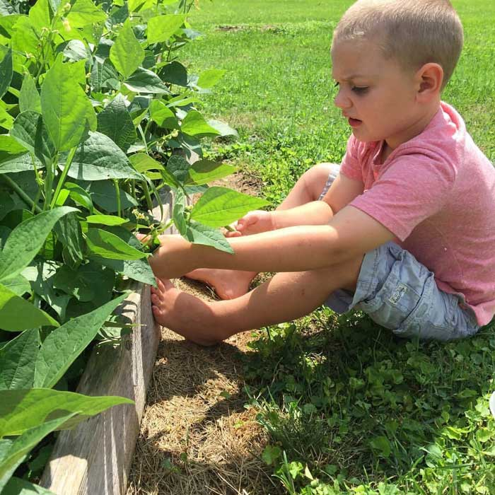 Harvesting green beans is my son's favorite harvest task. / Article: How to Get Your Kids to Enjoy Gardening by GrowJourney.com