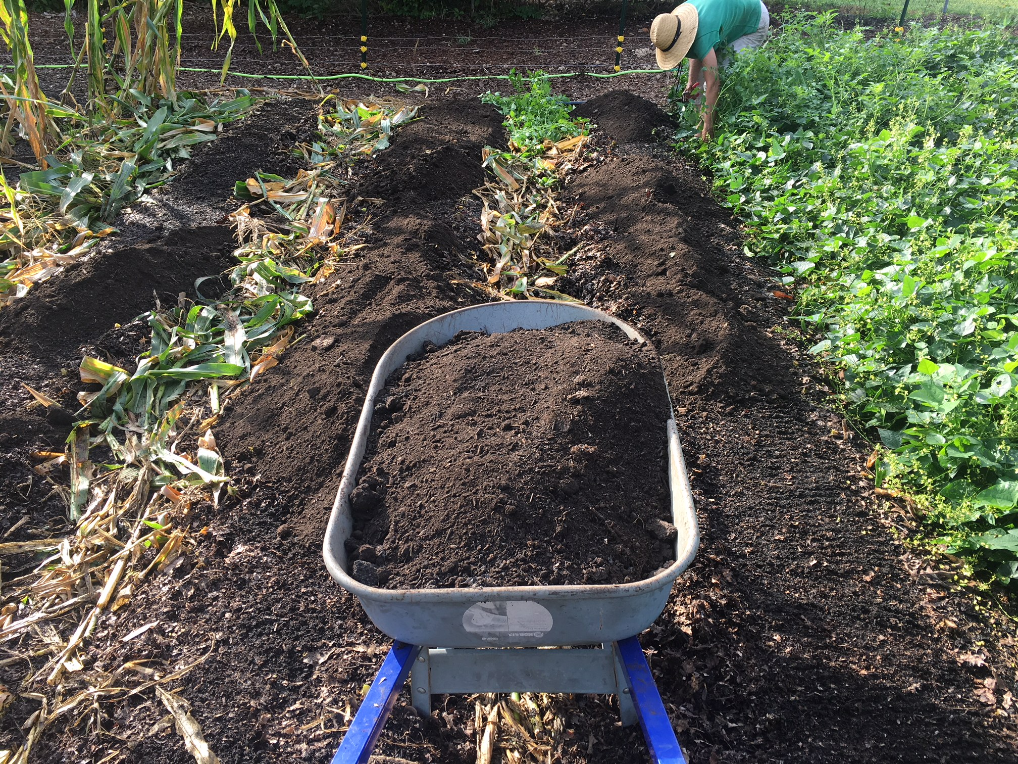 Compost going onto rows using a no-till organic gardening and farming method.