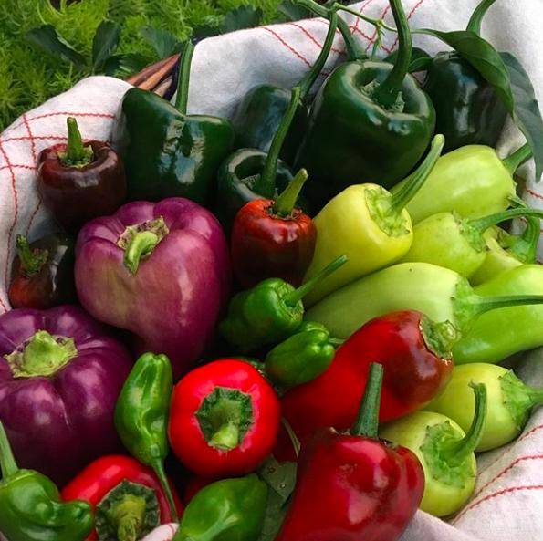 混杂的胡椒美丽的收获篮子。当你一次从你的花园里拿着篮子里拿着篮子时,你能做什么?/ growjourney网站的6种使用大量辣椒的创意方法