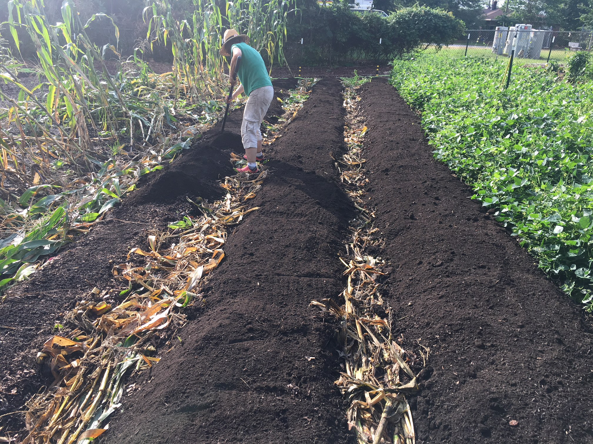 Raking out the compost to a depth of 2-3