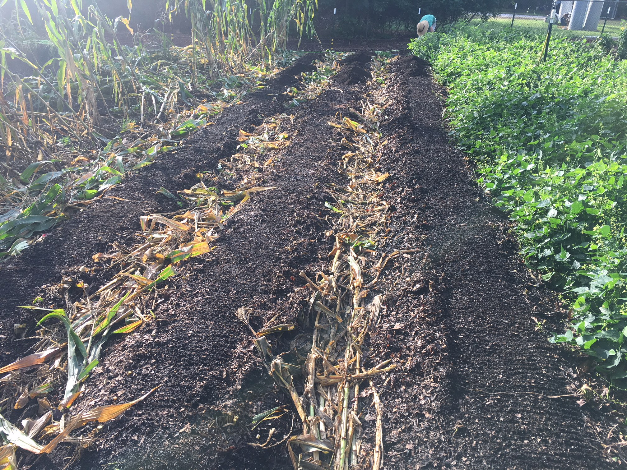 Rake off the remaining leaf debris to prep for new compost.