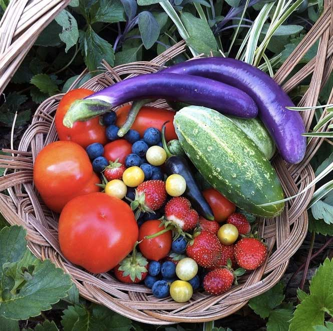 What better use of your yard than to grow a wide variety of delicious, nutrient-rich organic food that feeds you and provides habitat for thousands of other species that we share the world with?