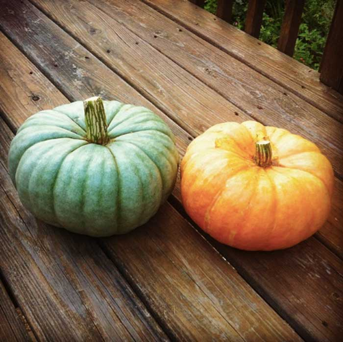 Rouge vif d'etampes and Jarrahdale, two heirloom pie pumpkins. Which one of these two berries would taste better in spiced coffee? (Yes, pumpkins are berries.) Pumpkin facts by GrowJourney