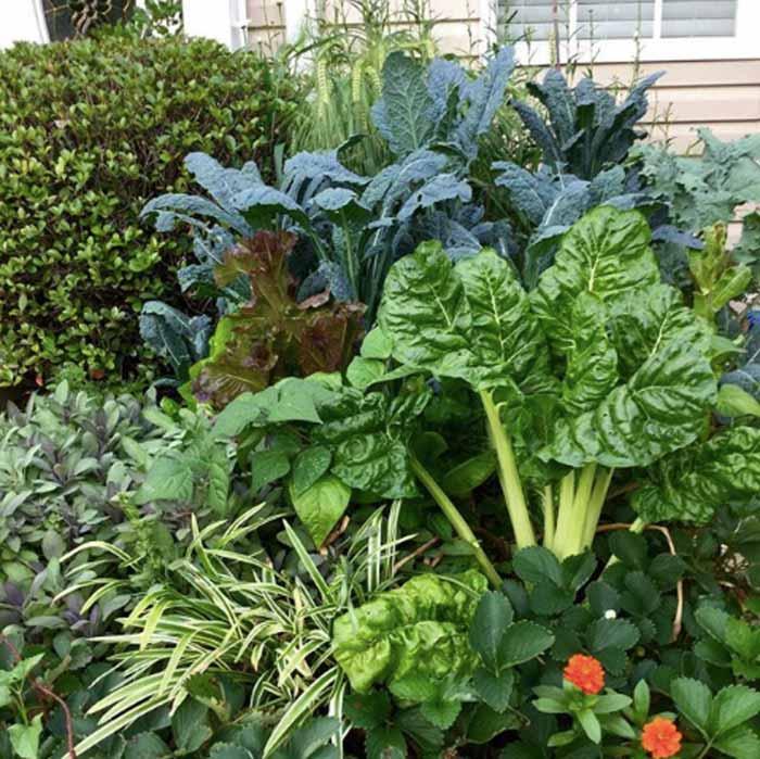可食用的景观 - 前院。