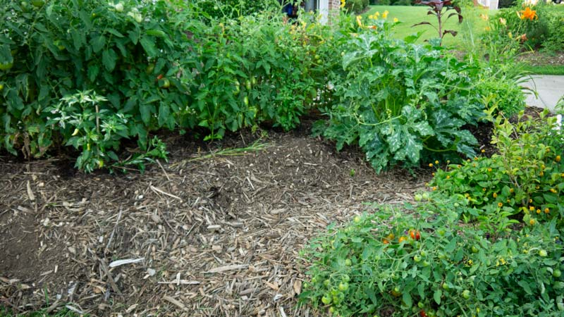 Peppers, tomatoes, squash, and various other plants in one of our garden beds