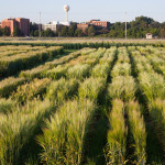 Idaho research suggests barley growers can reduce water usage without reducing yields
