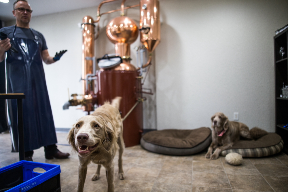 Ralf Loeffenholz and the Dampfwerk Distillery dogs, Olli and Rudi // Photo by Aaron Davidson
