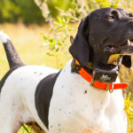 On Point: Willow Creek Kennels trains German Shorthair Pointers to be Master Hunters