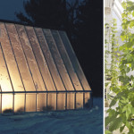 Wet-Hopped American Winter: Round Table Hops' plan for a year-round hydroponic harvest