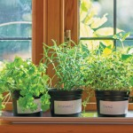 Think small, harvest big: Make the most of wee spaces for your gardening efforts