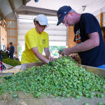 Green acres: investment, innovation, and the future of local hops