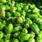 Mighty Axe Hops Releases Free Minnesota Hops Grower's Guide