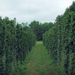 Video: Relive the 2016 harvest at Mighty Axe Hops