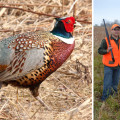 Left: Male Ring-necked Pheasant // Courtesy of Visit Greater Mankato; Right: At the Minnesota Governor's Pheasant Hunt 2012 (L to r, Adam Prock, assistant chief of staff, Governor Mark Dayton and Nick Simonson, president of the Lyon County Pheasants Forever chapter) // Courtesy Office of Gov Mark Dayton