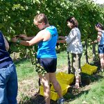 Celebrate the harvest at these 10 Minnesota wineries