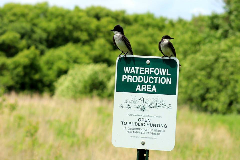 Waterfowl Producation Area Pomme de Terre