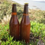 Scientists brew historic beer using yeast found in a 220-year old shipwreck