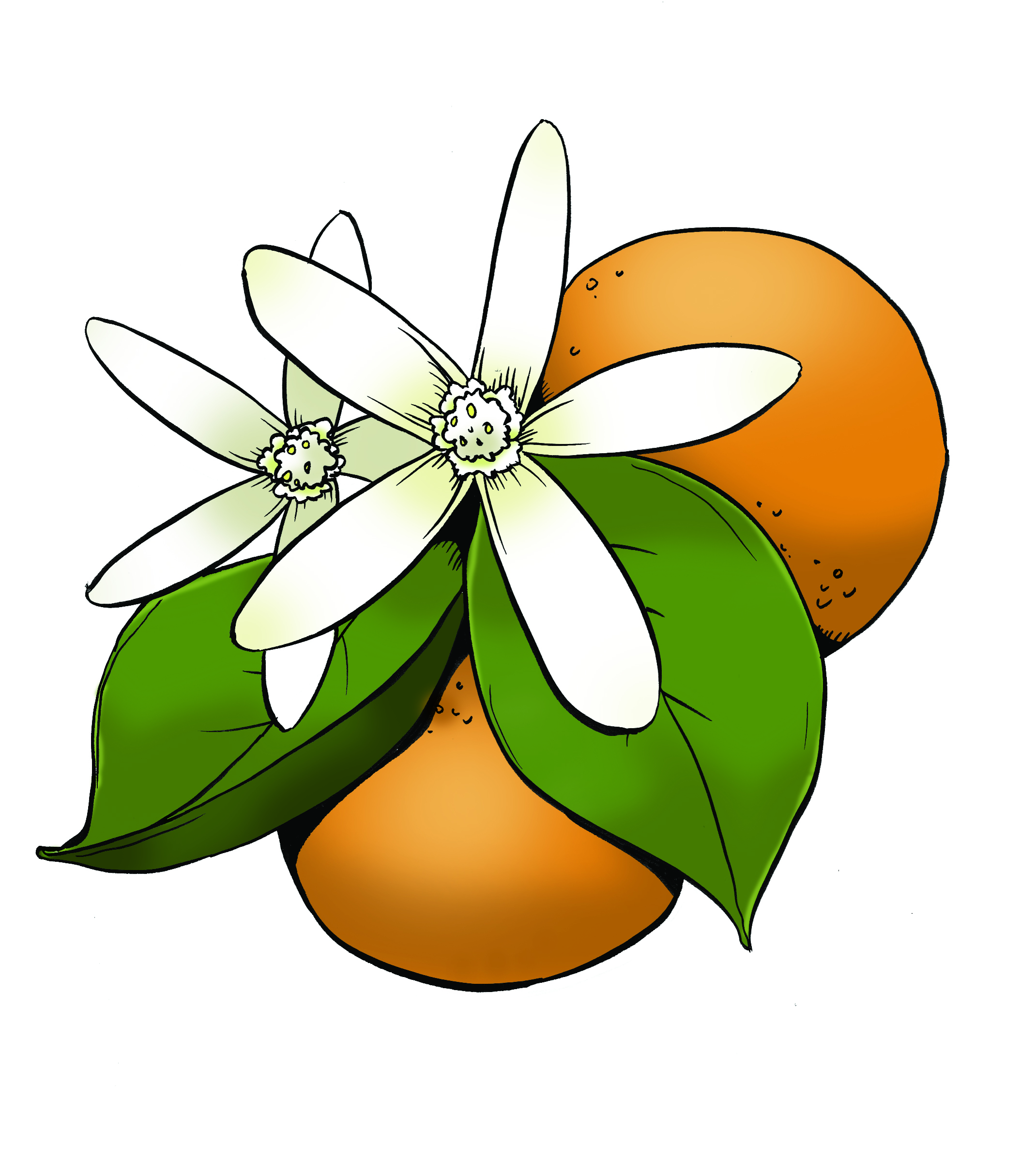 orange blossom color