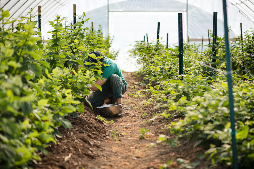 The hoop houses outside The Good Acre // Photo by Kevin Kramer, The Growler