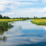 The Food that Grows on Water: Harvesters and state agencies seek to protect Minnesota's wild rice legacy