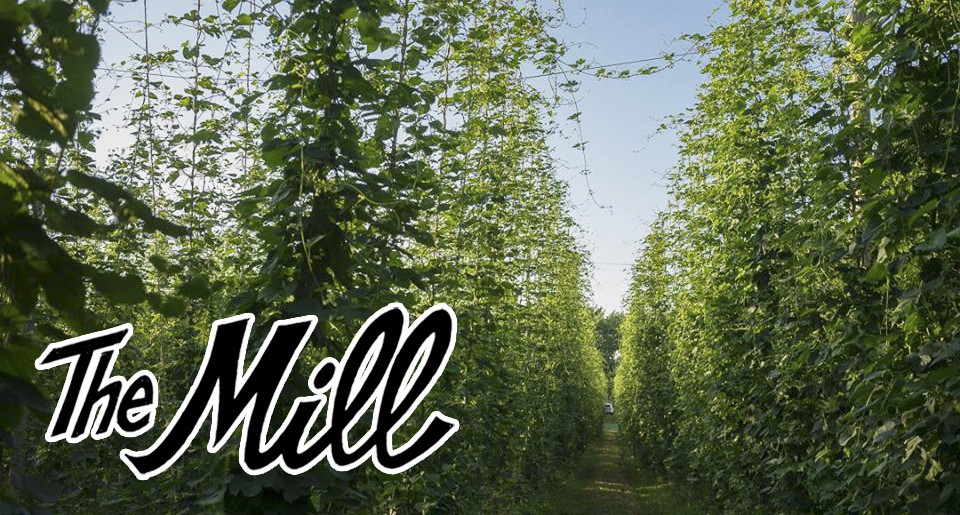 Mighty Axe Hops prepares for their largest harvest ever // Photo via Mighty Axe Hops' Facebook