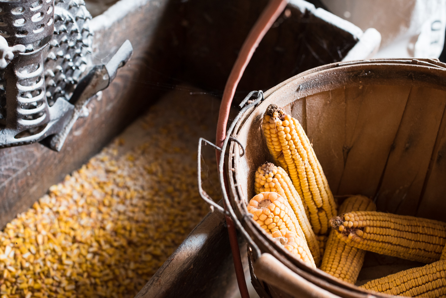 Ed Krugmire, owner of Schech's Mill, grows his own corn for cornmeal // Photo by Kevin Kramer, The Growler