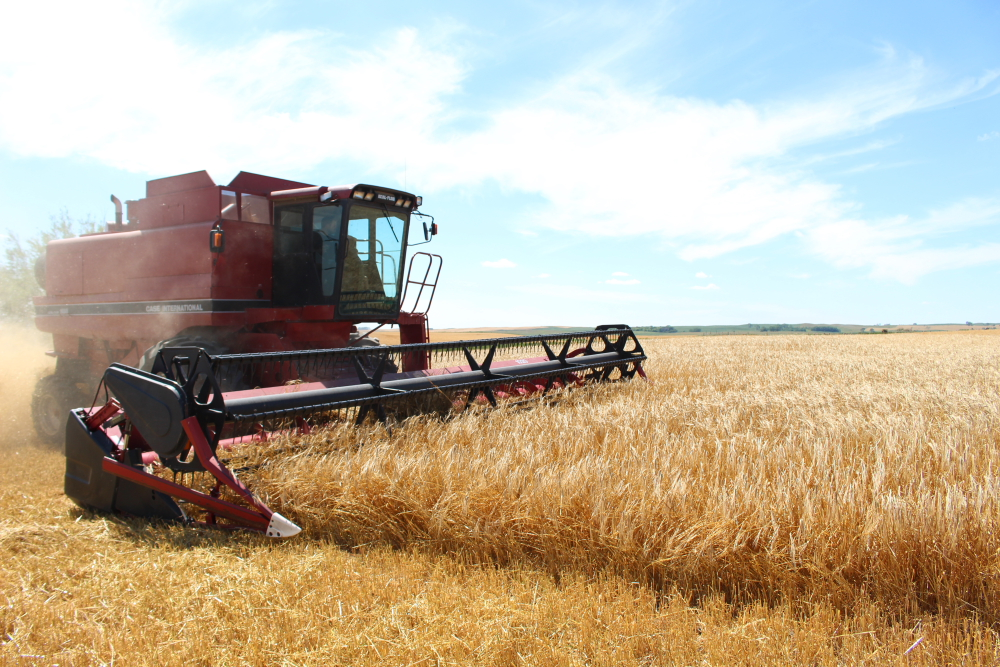 Barley harvested at Stober Farm in Goodrich, North Dakota, will be malted at Two Track Malting // Photo courtesy of Two Track Malting