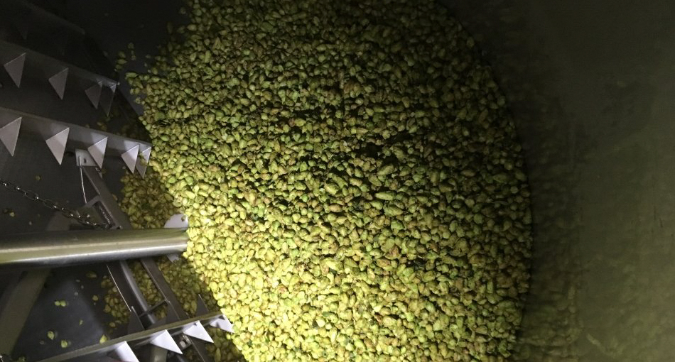 Fresh hops being used in a new beer at 56 Brewing // Photo via 56 Brewing's Twitter