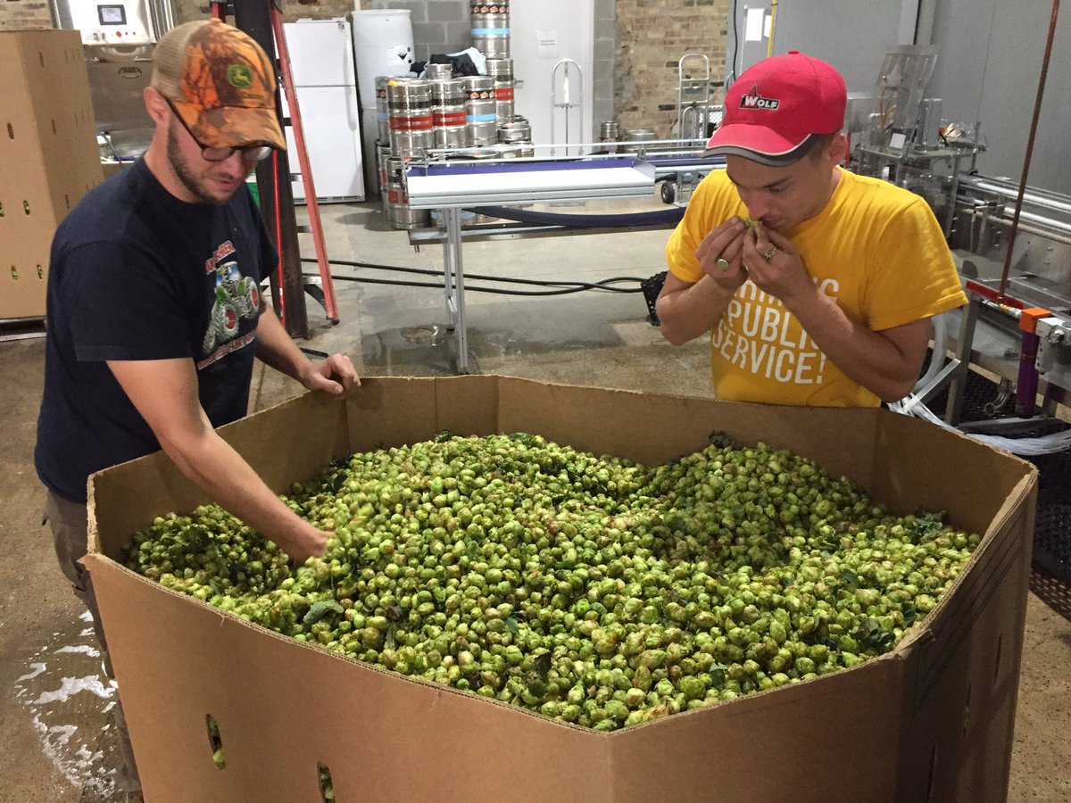 Lake Monster is rolling in fresh hops // Photo via Lake Monster's Twitter
