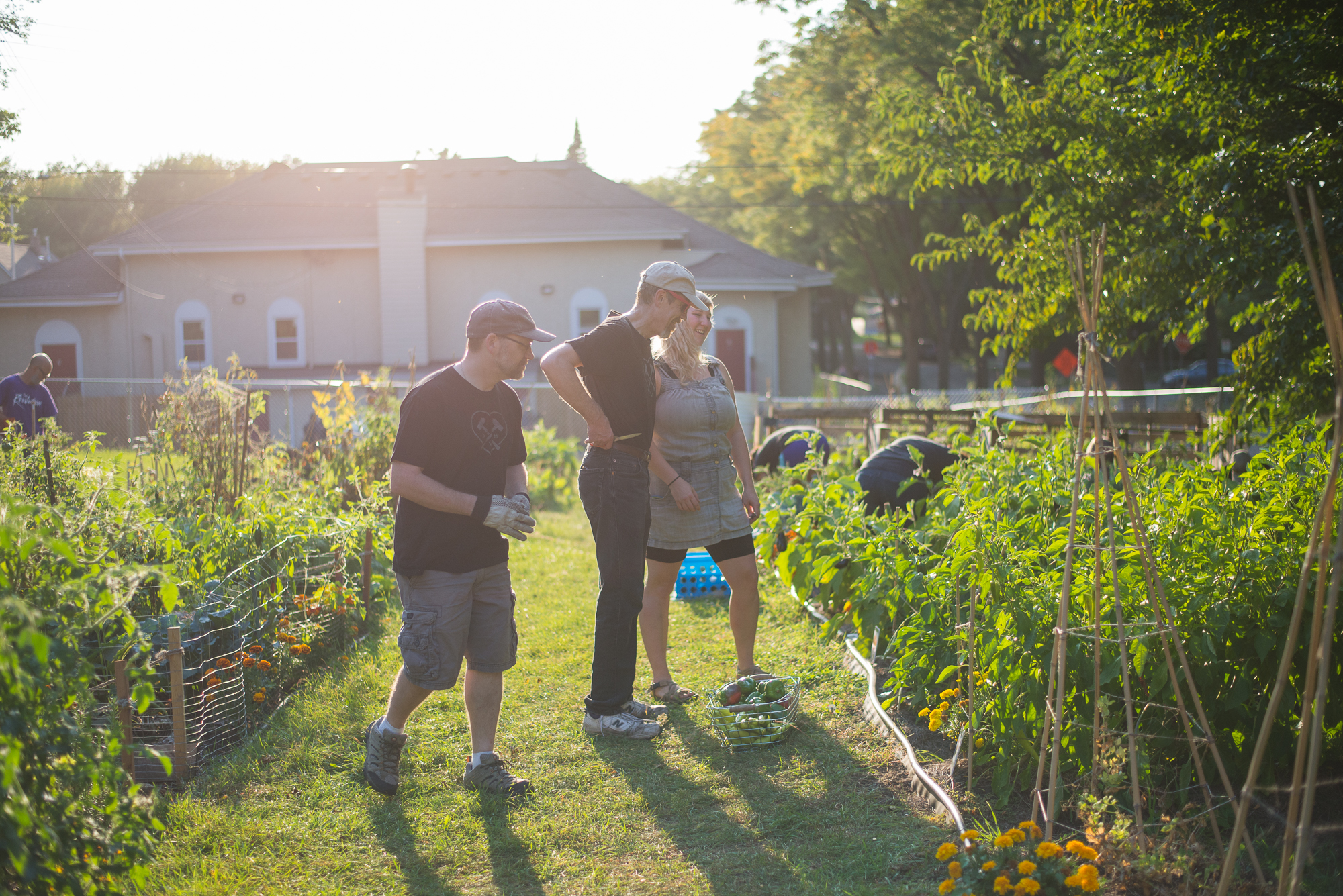 Dangerous Man Community Volunteers tend to the Sheridan Community Garden in Northeast Minneapolis // Photo by Max Lee