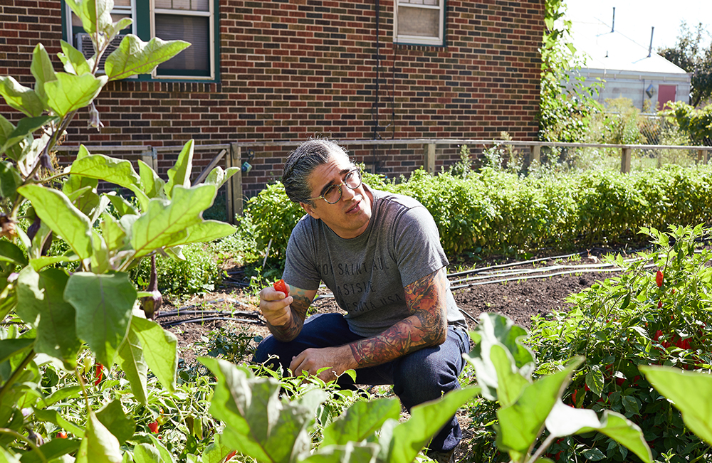 Eddie Wu looked through some of the pepper crops at Urban Roots before stopping for a taste test // Photo by Wing Ta