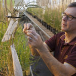 U of M paving the way toward better barley, stronger hops