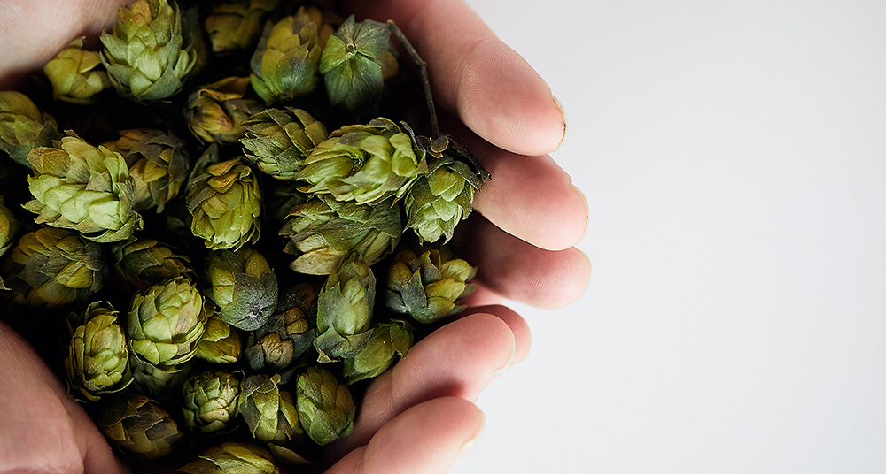 Brewing Terroir: Unearthing the distinct regional flavor of hops