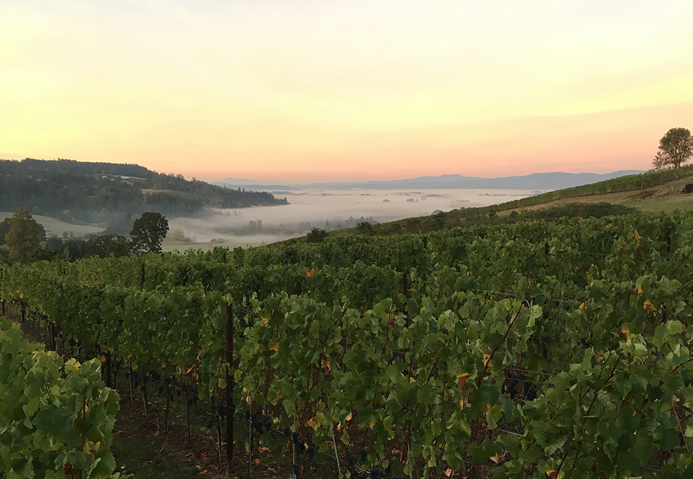 The Willamette Valley // Photo courtesy iOTA Cellars Wine & Little Minnesota in the Willamette: Winemakers from the North have ...