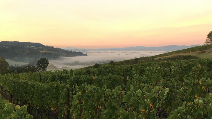 Little Minnesota in the Willamette: Winemakers from the North have staked their claim in Oregon's wine scene